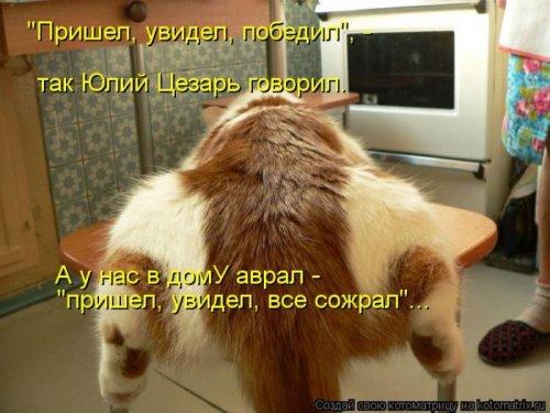 Очередной сборник котоматриц (25 шт)
