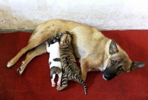 Котята, щенята и другие зверята (37 фото)