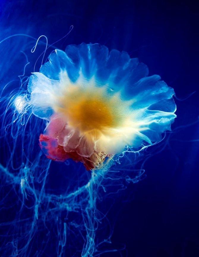 меняем фото самые красивые медузы этот