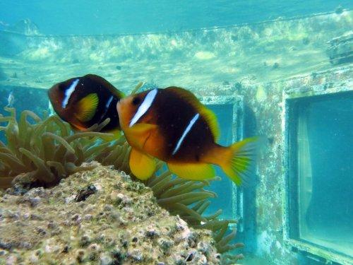Заброшенный в Красном море подводный стриптиз-клуб (14 фото)