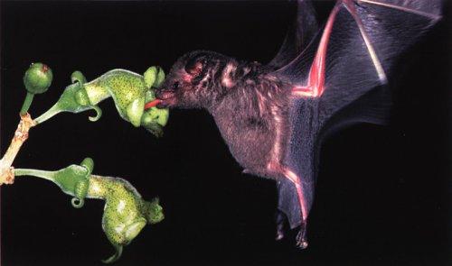 Топ-10: Интересные факты о летучих мышах