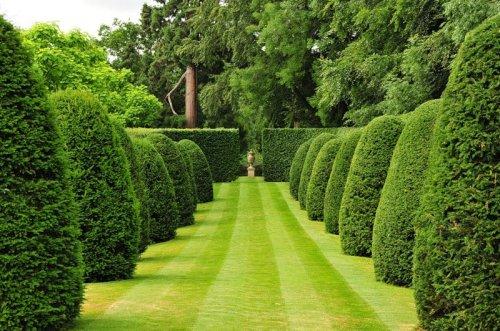 Фигурная стрижка деревьев или топиар (33 фото)