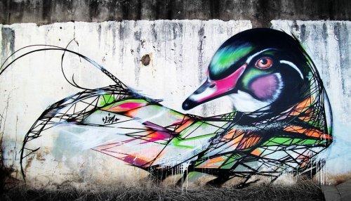 Разноцветные птицы в работах уличного художника L7M (13 фото)