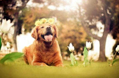 Очаровательные питомцы в фотографиях Джессики Трин (28 фото)