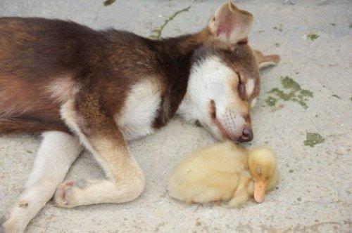 Новый пост с забавными животными (33 фото)