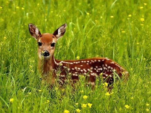 10 Неожиданно опасных животных