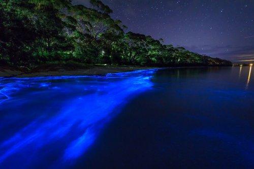 Австралийское побережье, освещённое планктоном (3 фото)