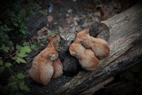 Животные-милахи (34 фото)