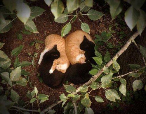 Животные-милахи (32 фото)