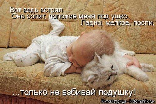 Новая смешная котоматрица (23 фото)
