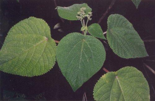 Топ-10: Растения, которые не стоит разводить у себя в доме
