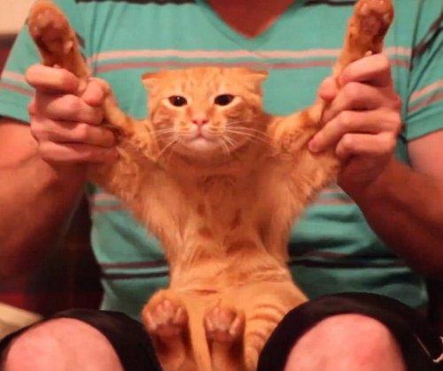 Дабстеп-кот