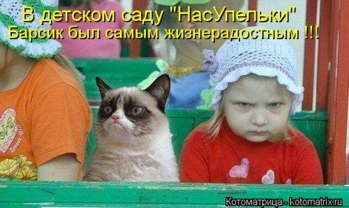 Новый сборник прикольных котоматриц (32 шт)
