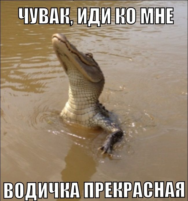 1378074957_prikoly-20.jpg