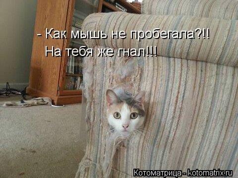 Новый сборник лучших котоматриц недели (32 шт)