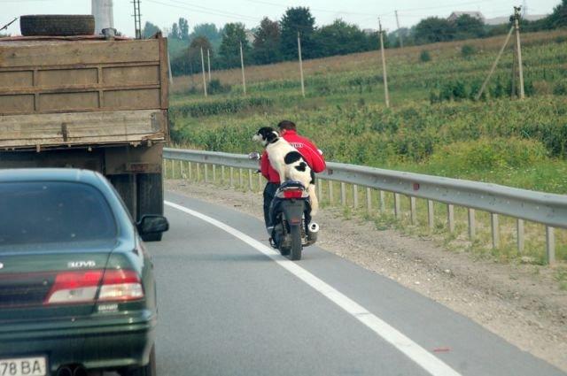 Приколы на дороге в картинках
