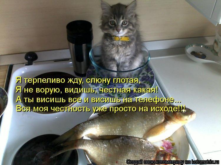 http://www.bugaga.ru/uploads/posts/2013-09/1379241669_kotomatricy-3.jpg