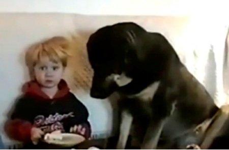 8 Забавных животных-воришек, которых засняли на видео