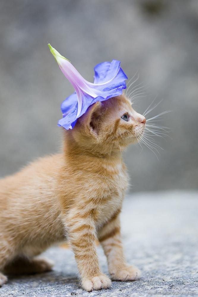 что прикольные котята разгрузки