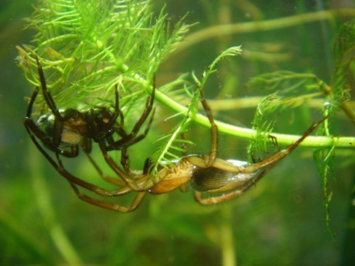 Топ-10: Жуткие способности пауков