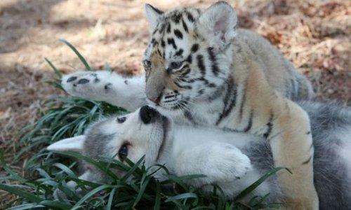 Животные-очаровашки (36 фото)