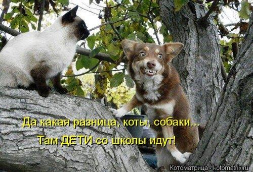 Свежие прикольные котоматрицы (26 шт)