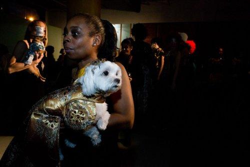 Собаки-модницы в фотографиях Робин Шварц (17 шт)