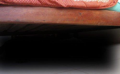 Неожиданный гость провёл под кроватью всю ночь (9 фото)