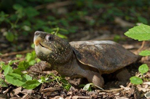Топ-10: Странные виды черепах