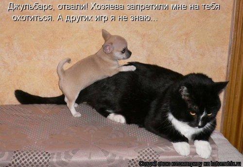 Новые смешные котоматрицы (23 фото)