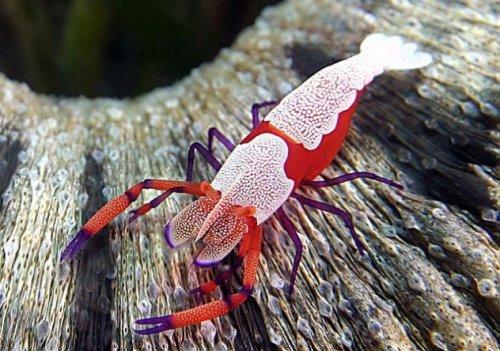 10 Морских существ, похожих на инопланетян