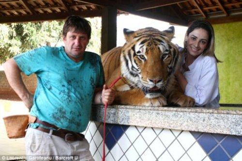 Домашние тигры бразильца Ари Борхеса (13 фото)