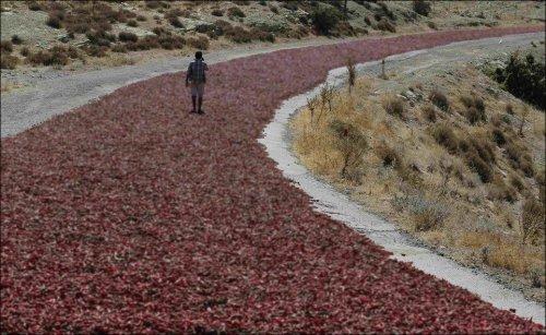 Фотозагадка дня: почему дорога стала красной? (5 фото)