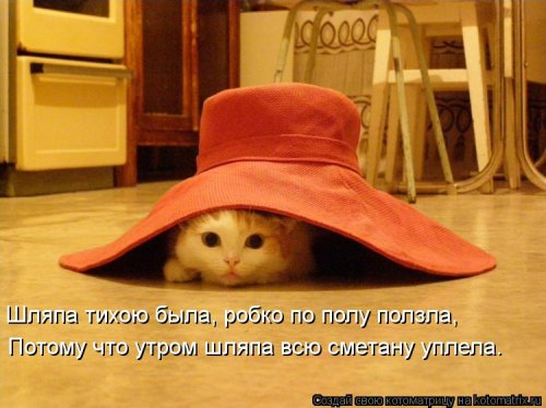 Новые чудесные котоматрицы (23 фото)