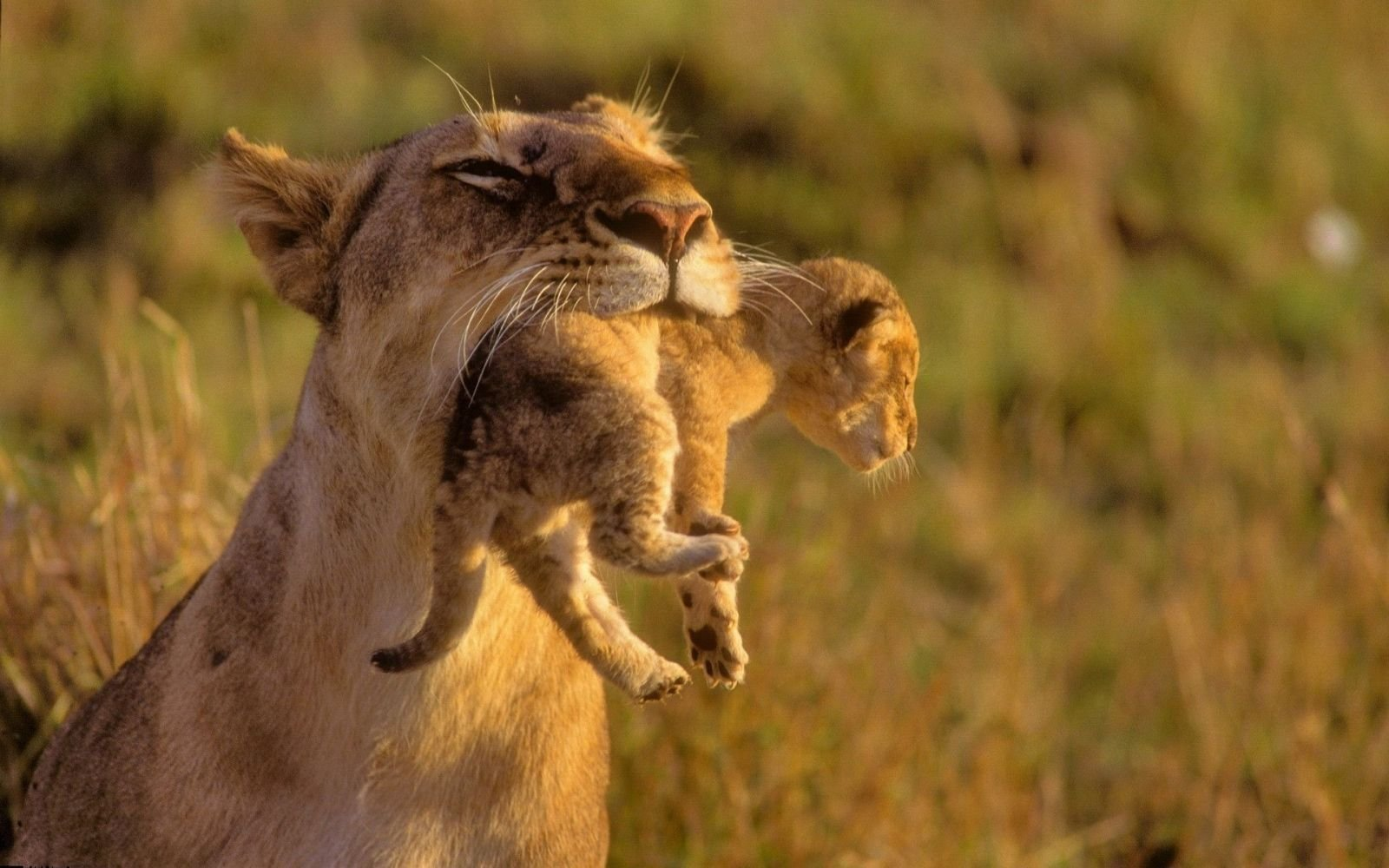 картинки со смыслом животные интересные фото
