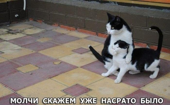 Веселые фотографии из сети - Страница 9 1381823664_prikoly-27-1