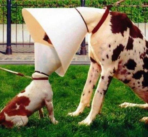 Чудесные фотографии с животными (34 фото)