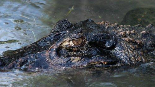 Ужасающие существа реки Амазонка