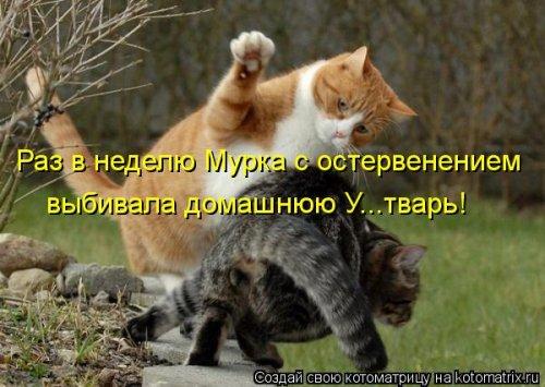 Новые прикольные котоматрицы (24 шт)