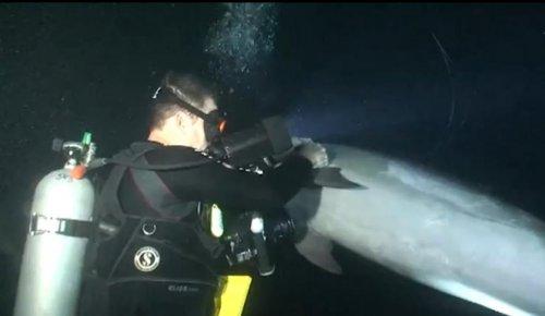 Дайверы высвободили дельфина, запутавшегося в рыболовной леске