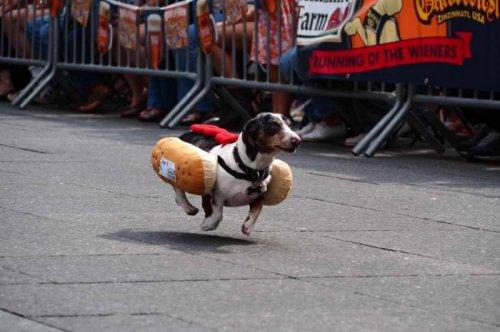 В Цинциннати состоялся Забег венских сосисок 2013 (13 фото)