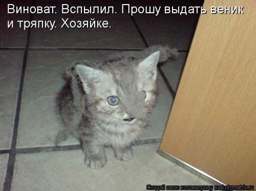 Новые прикольные котоматрицы (38 фото)