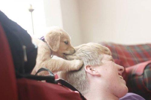Забавные фотографии с собаками (17 шт)