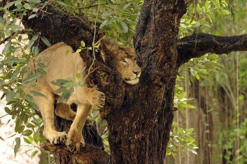 Очаровательные и забавные животные (27 фото)