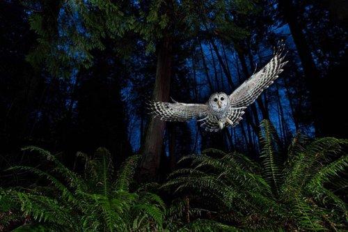 Фотографии-победители конкурса Wildlife Photographer of the Year 2013 (16 фото)