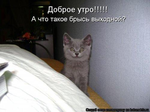 Новые котоматрицы (24 шт)