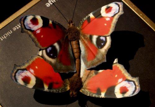 Секс в животном мире: необычная выставка в Музее естественной истории в Мюнстере (13 фото)