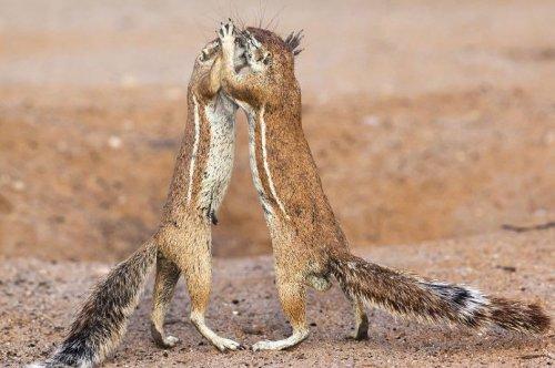 Чудесные животные (30 фото)