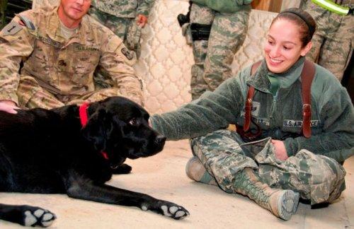 Военные рядом с животными (22 фото)