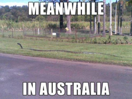 Тем временем в Австралии (28 фото)